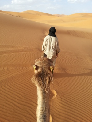 our guide to the Sahara
